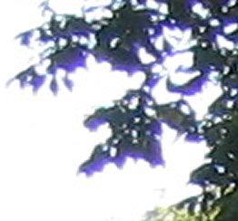 Photographie et vidéo - Artefacts, effets et méprises - Page 5 Aberrationchromatiquex2
