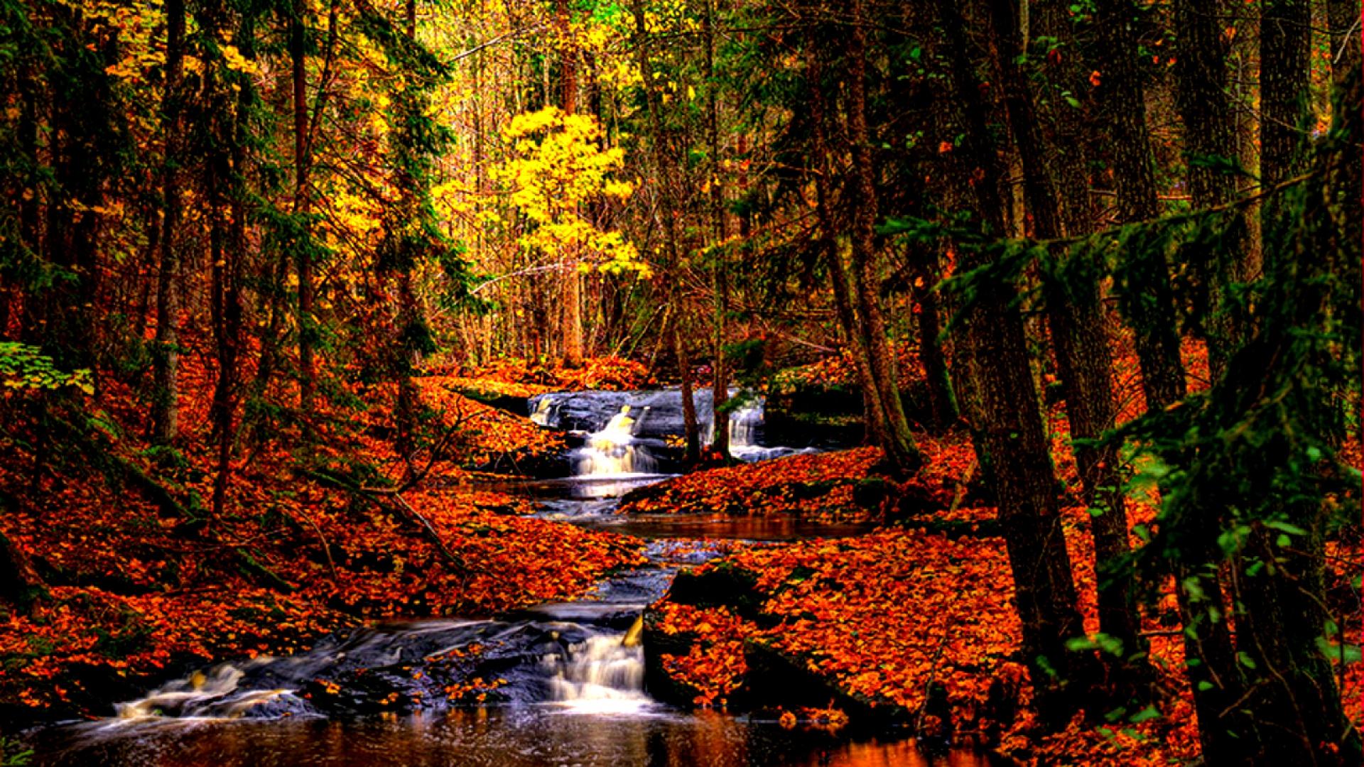 Hình nền mùa thu Autumnbeauty19