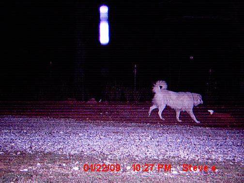 Photographie et vidéo - Artefacts, effets et méprises - Page 6 Alabamamilkbottledog012