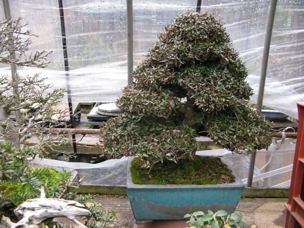 Centro bonsai tenerife en JAPÓN 2009-2010, IIIª Parte 115wj