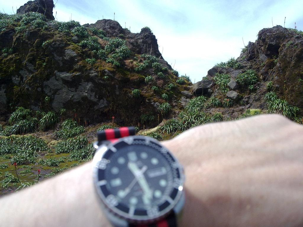 De retour de Guadeloupe, j'ai vu plein de belles choses, même des montres... 09112010755