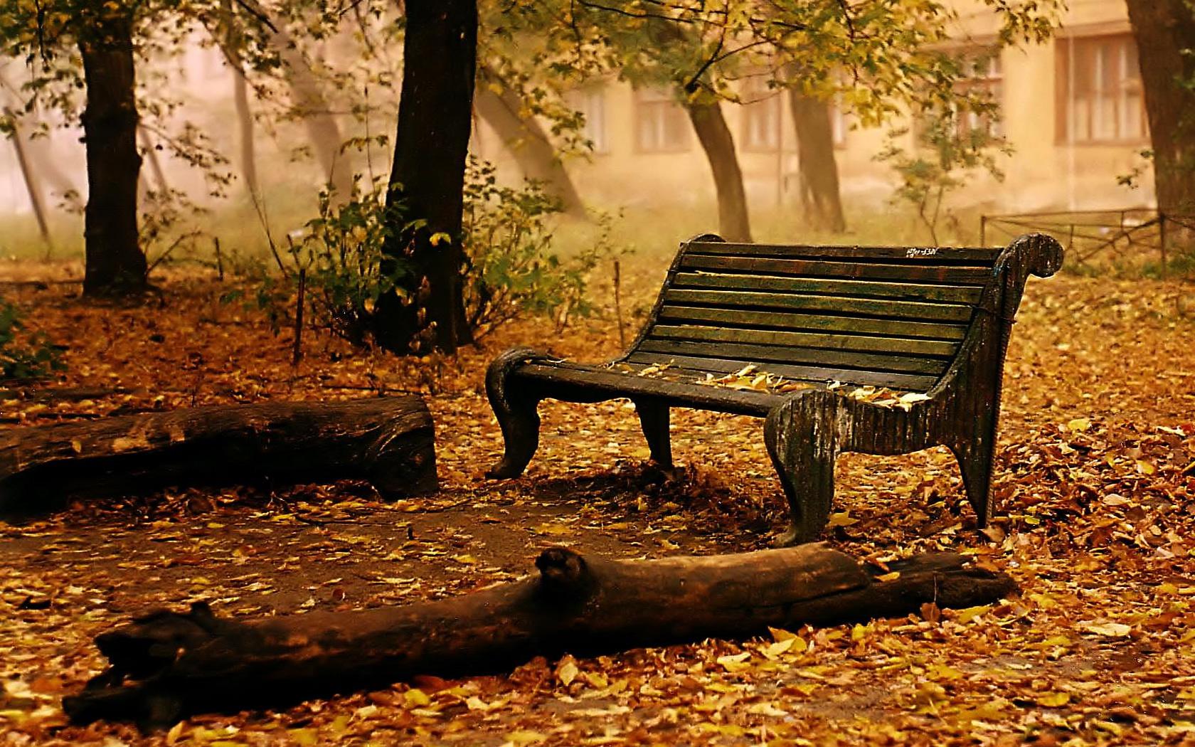 Hình nền mùa thu Autumnleavesbackground1