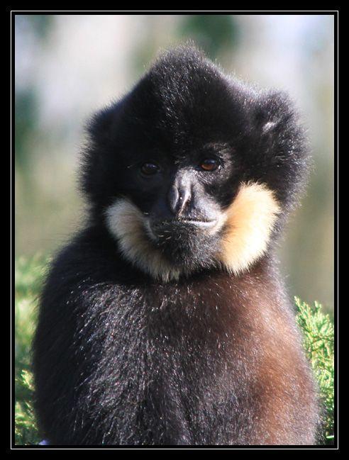 Zoo de Doué la Fontaine Img6692ni