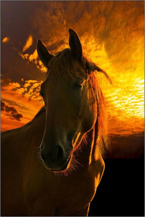 لمحبيه الخيول Horses11