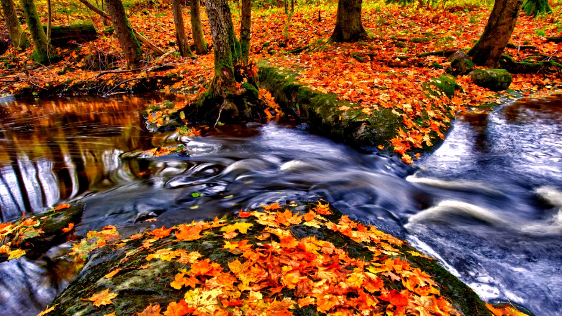 Hình nền mùa thu Autumn35