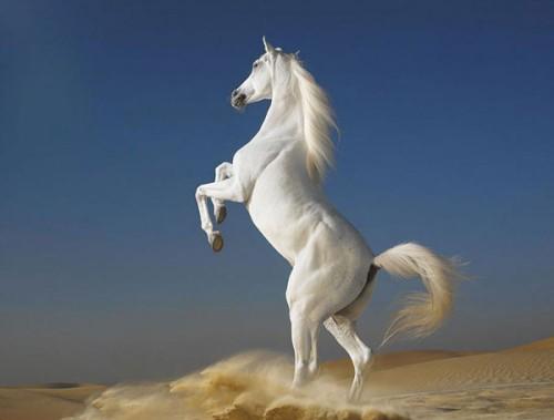 لمحبيه الخيول Horses12