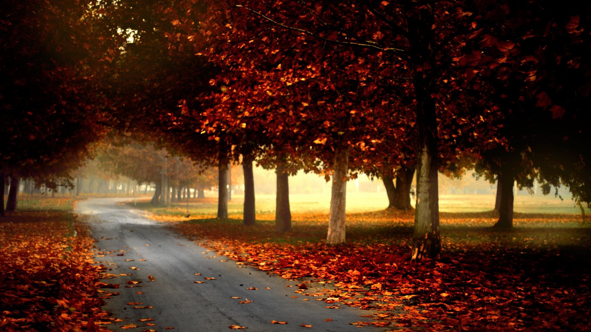 Hình nền mùa thu Autumnbeauty58