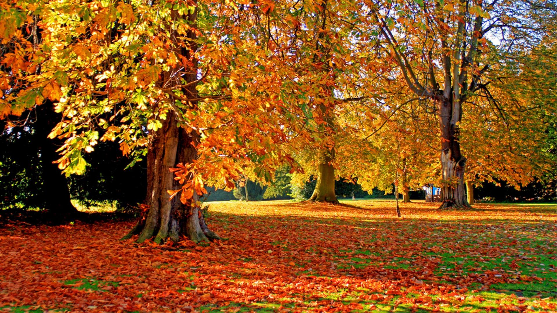 Hình nền mùa thu Autumn19a