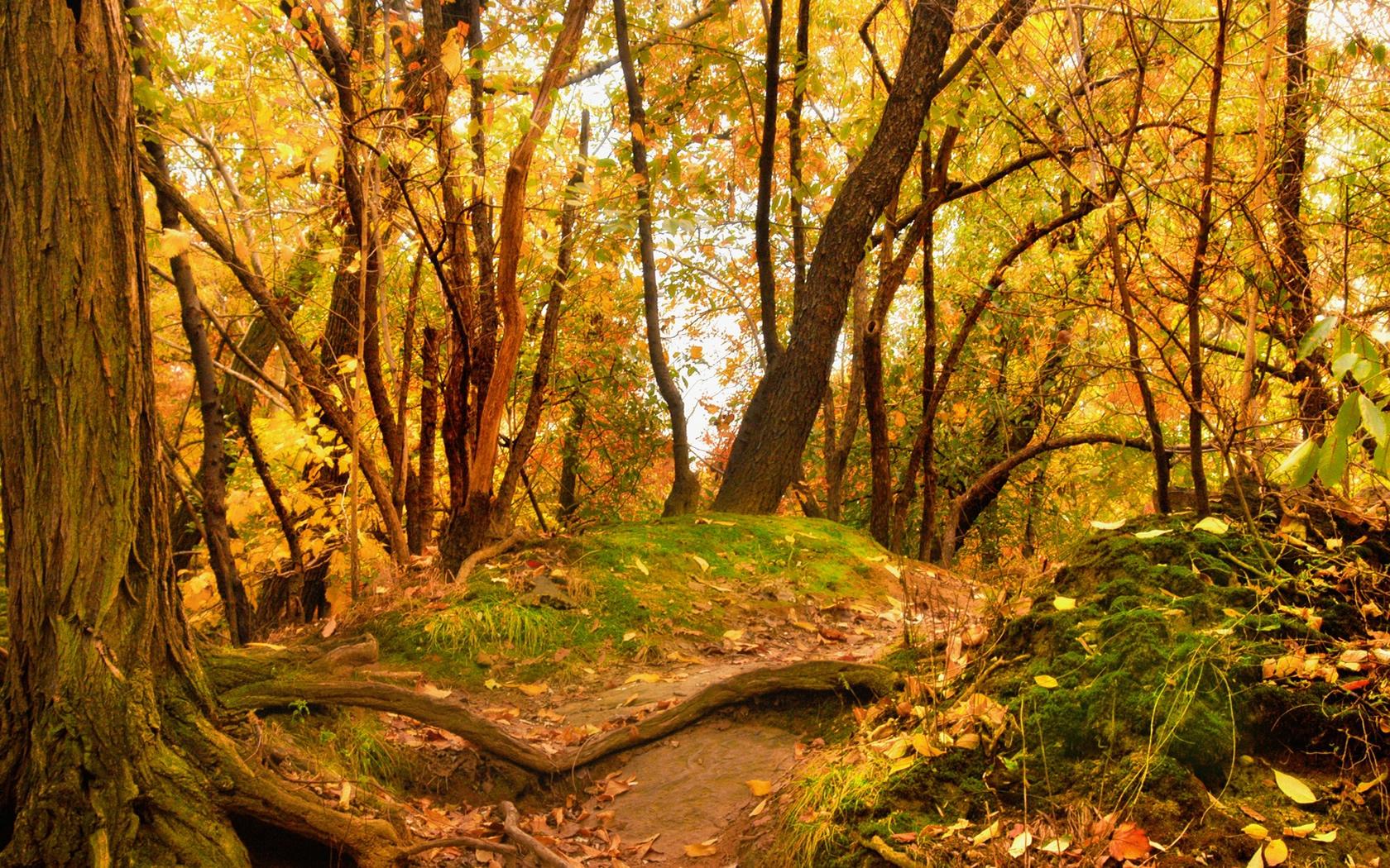 Hình nền mùa thu Autumnscenerywallpaper1