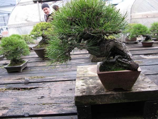 Centro bonsai tenerife en JAPÓN 2009-2010, IIIª Parte 120am