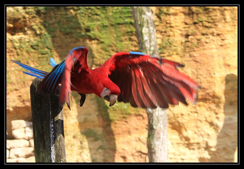 Zoo de Doué la Fontaine Img6590b