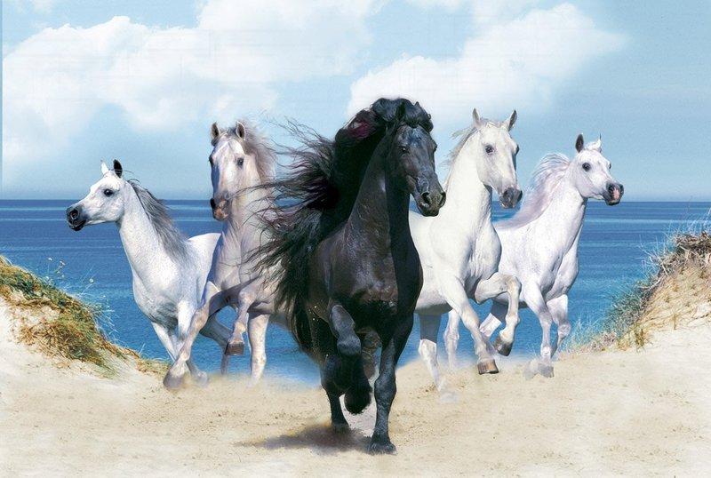 Konji 0b970e1b28962c585254211