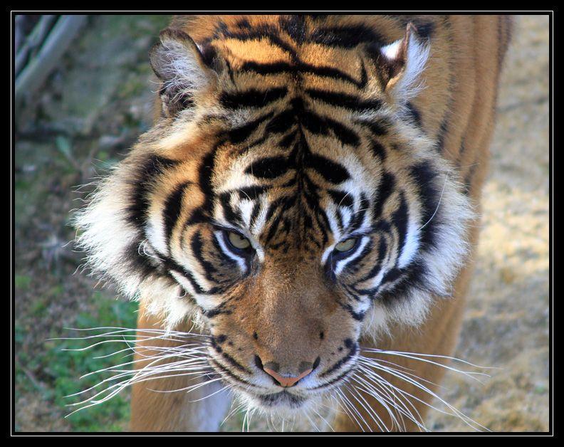 Zoo de Doué la Fontaine Img6699i