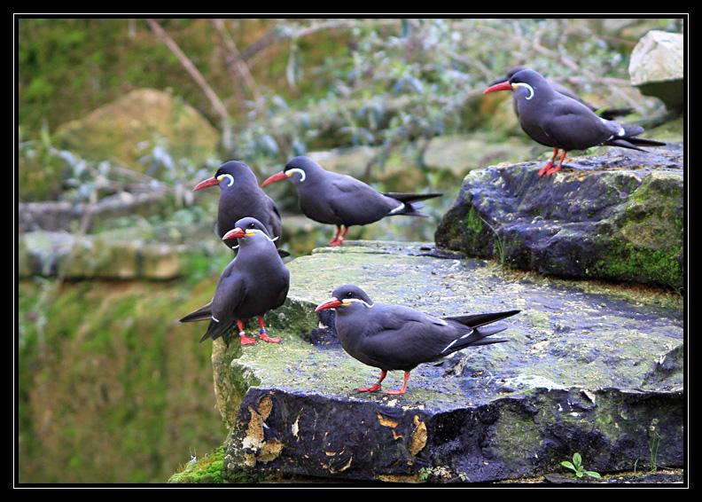 Zoo de Doué la Fontaine Img6595l