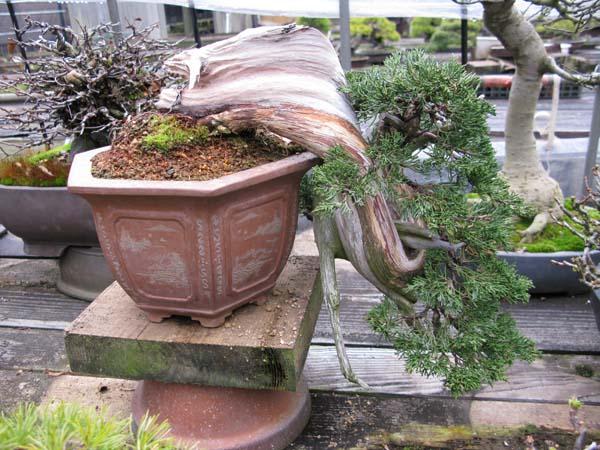 Centro bonsai tenerife en JAPÓN 2009-2010, IIIª Parte 109pv