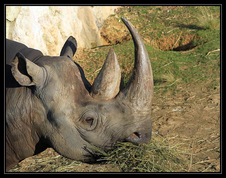 Zoo de Doué la Fontaine Img6743r