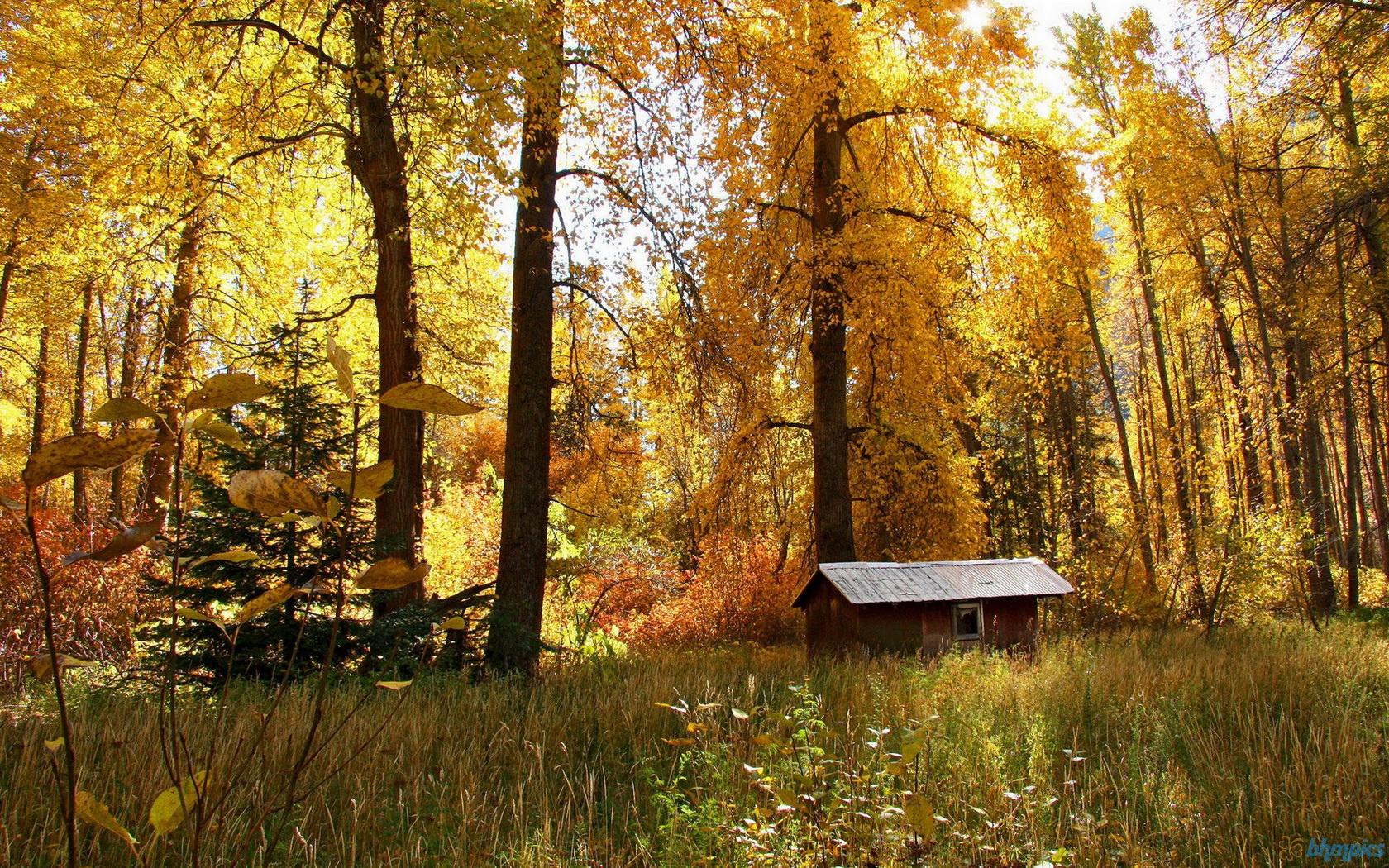 Hình nền mùa thu Seasonsautumn1680x1050