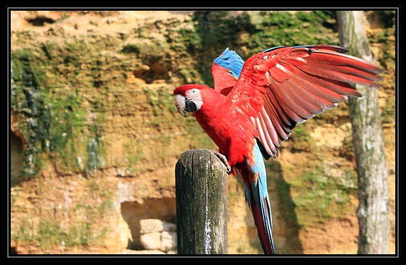 Zoo de Doué la Fontaine Img6589h