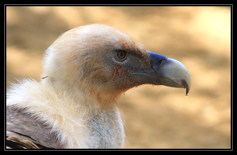 Zoo de Doué la Fontaine Img6660k