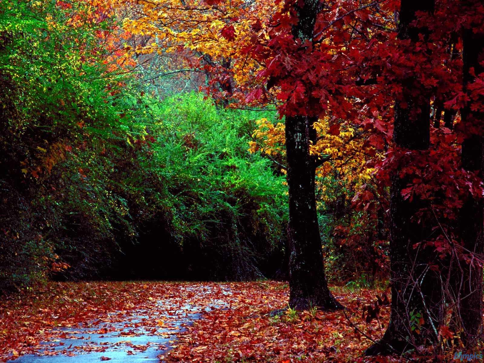 Hình nền mùa thu Autumnforestandlandscap