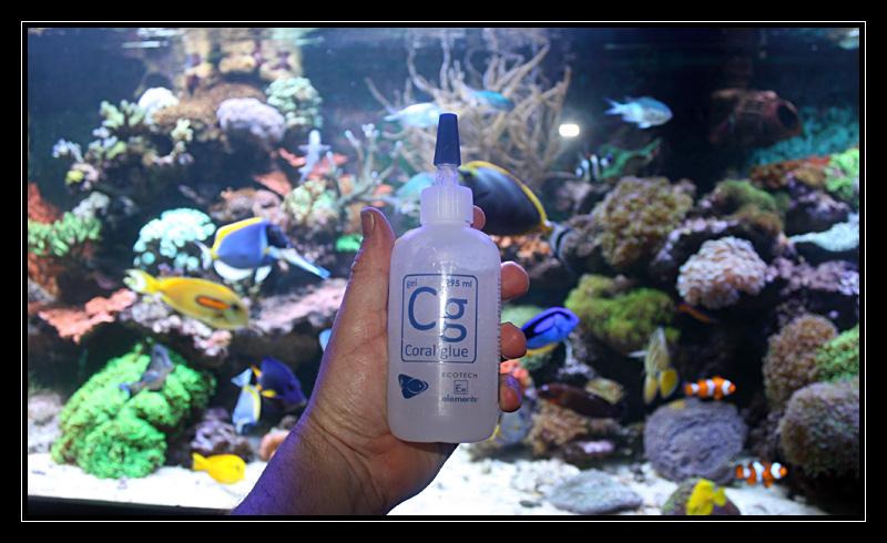 Enfin une vraie glue a coraux! Img5883j