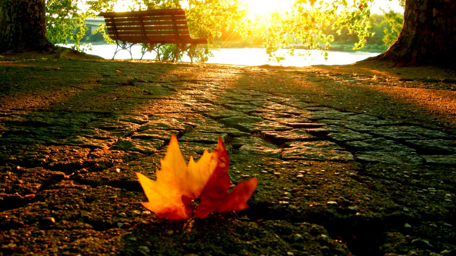 Hình nền mùa thu Autumn81a