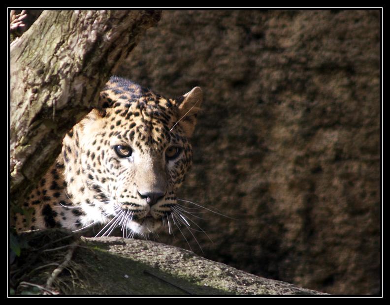 Zoo de Doué la Fontaine Img6506hj