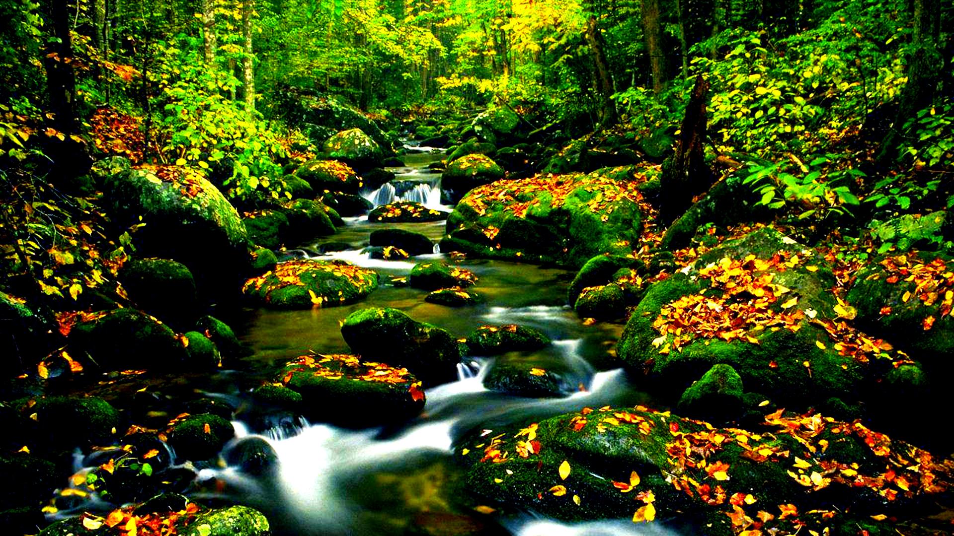 Hình nền mùa thu Autumn12