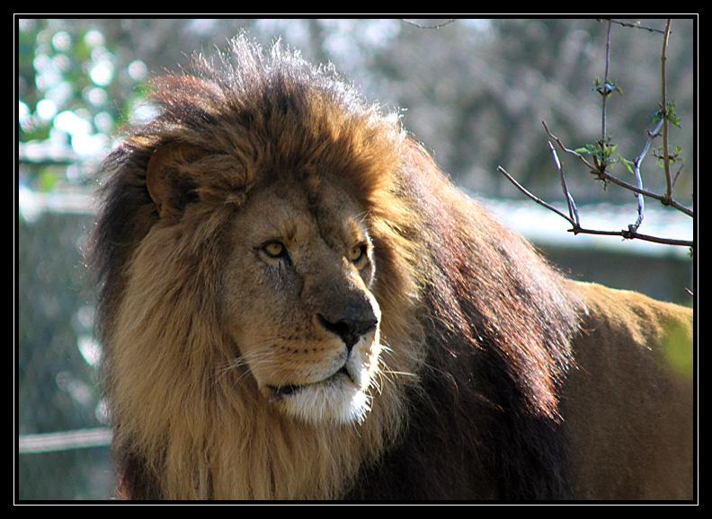 Zoo de Doué la Fontaine Img6635tm