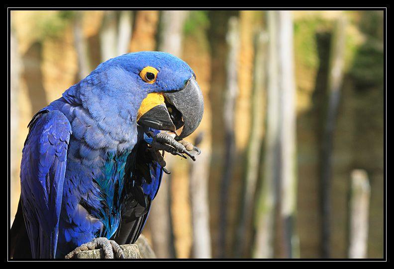 Zoo de Doué la Fontaine Img6579hh