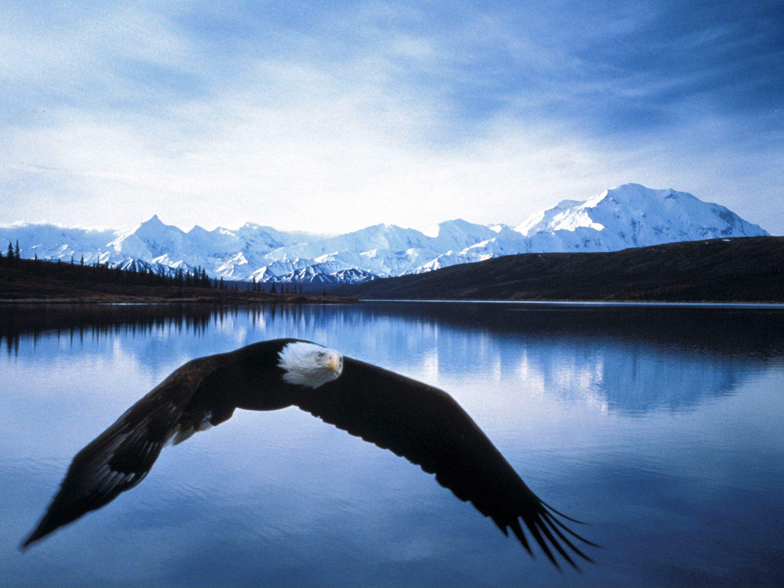 Hình nền Đại Bàng Eagles1y
