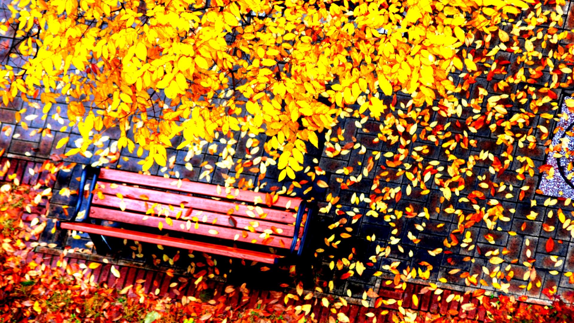 Hình nền mùa thu Autumn32a