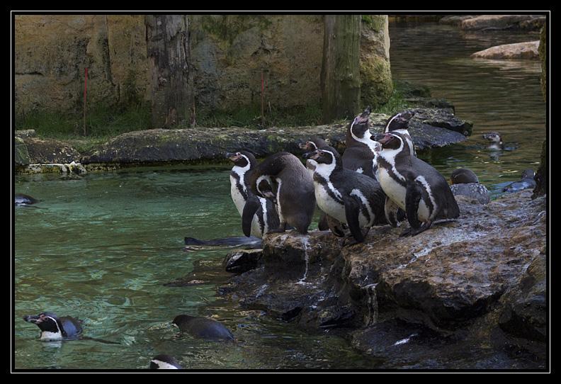 Zoo de Doué la Fontaine Img6531y