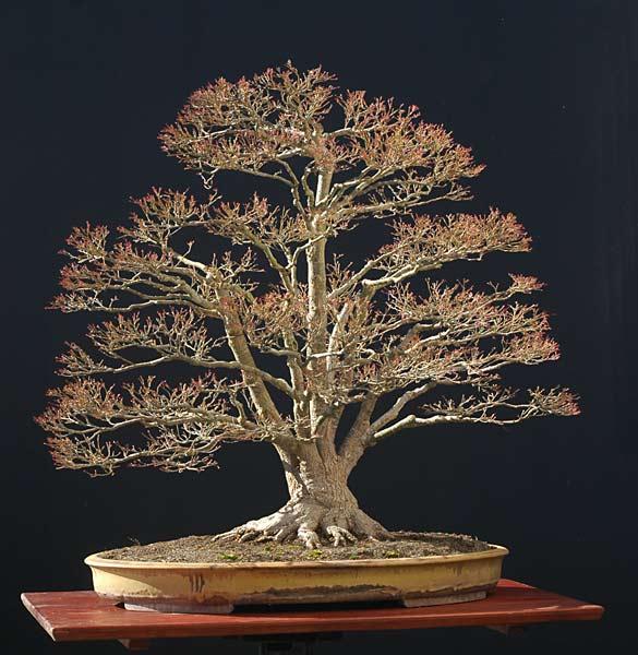 bonsai naturalista? 200704dsc0338v