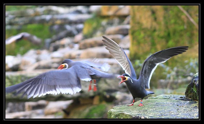 Zoo de Doué la Fontaine Img6606y