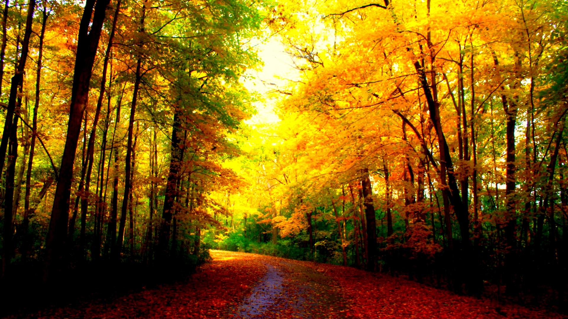 Hình nền mùa thu Autumn19b