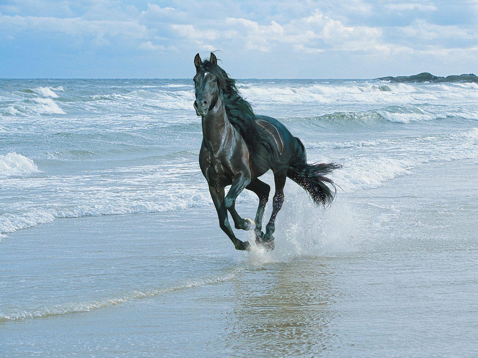 Hình nền ngựa Horses5