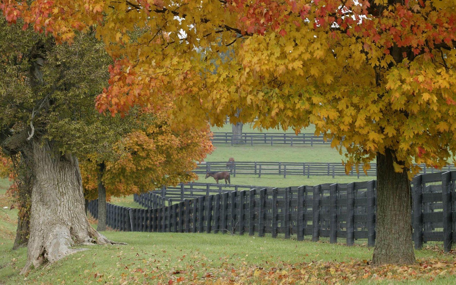 Hình nền ngựa Horses6