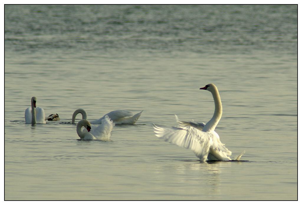 Rencontre Lac du Der 9 et 10 octobre 2010 (Sortie annuelle) - Page 6 Igp6311