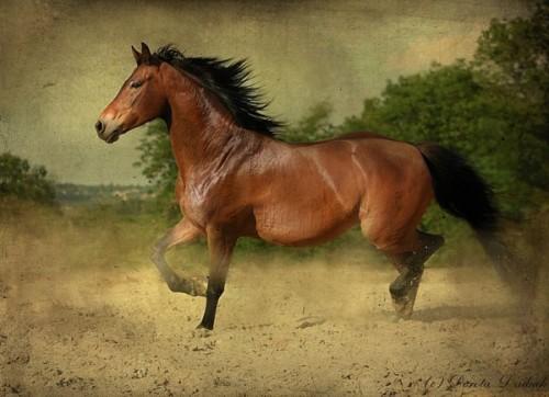 لمحبيه الخيول Horses9r