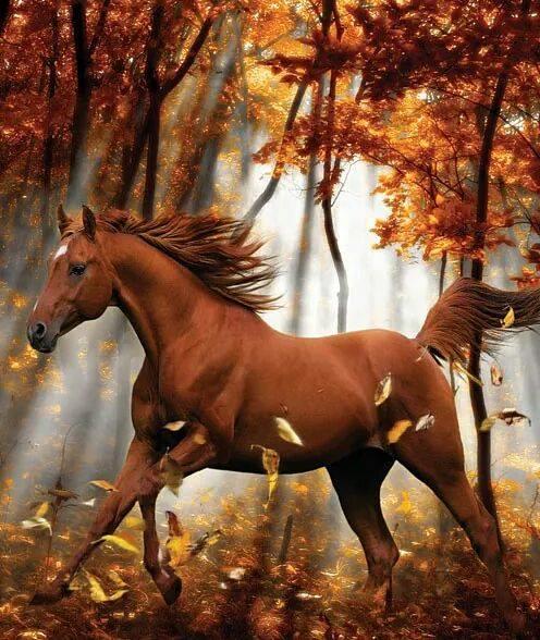 Najlepši konji na svetu - Page 4 Vd365Y