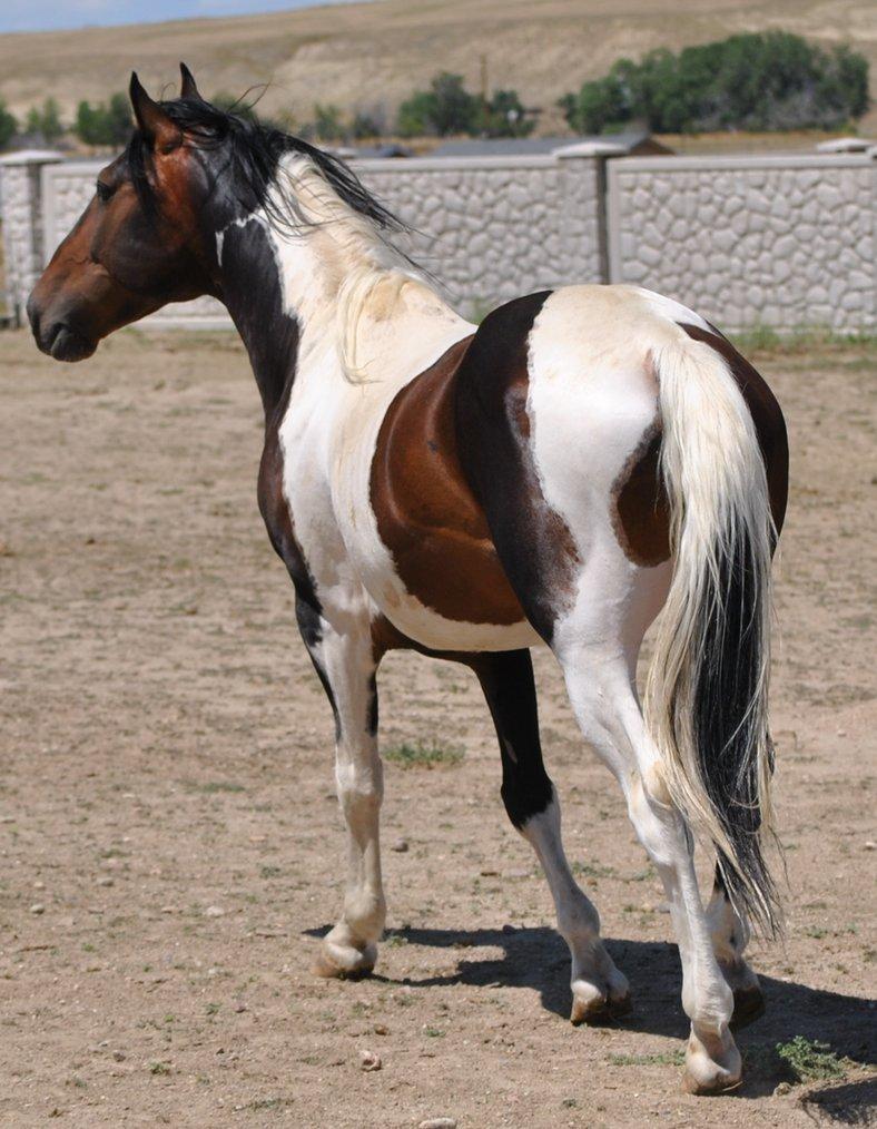 Najlepši konji na svetu - Page 4 Vc38kh