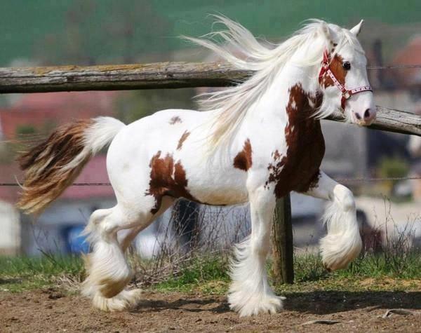 Najlepši konji na svetu - Page 4 Z9MztH