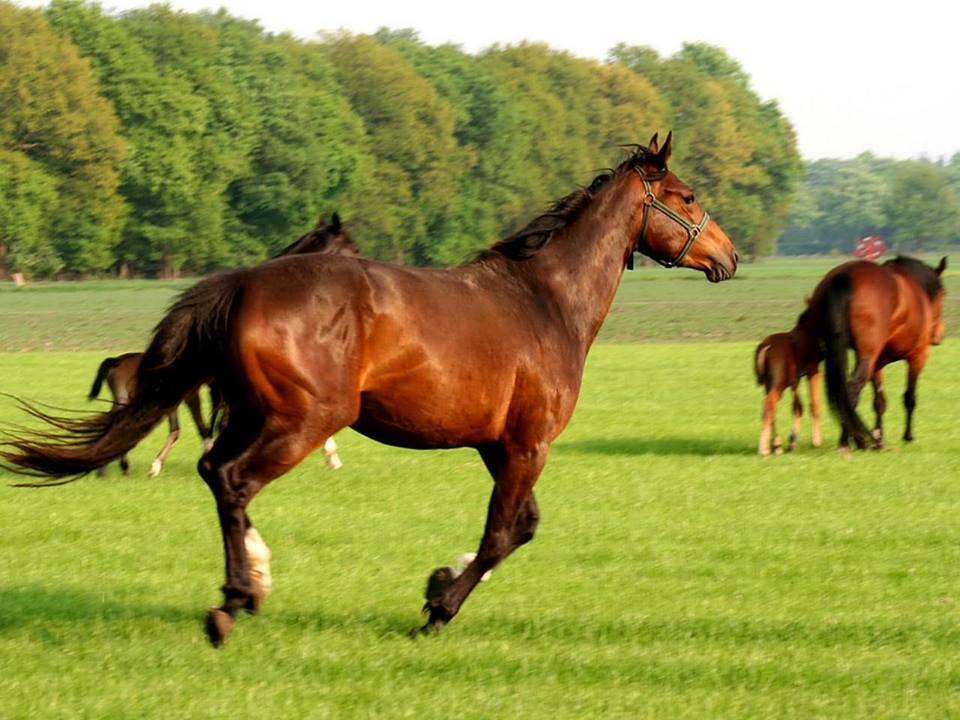 Najlepši konji na svetu - Page 4 YhpsY2