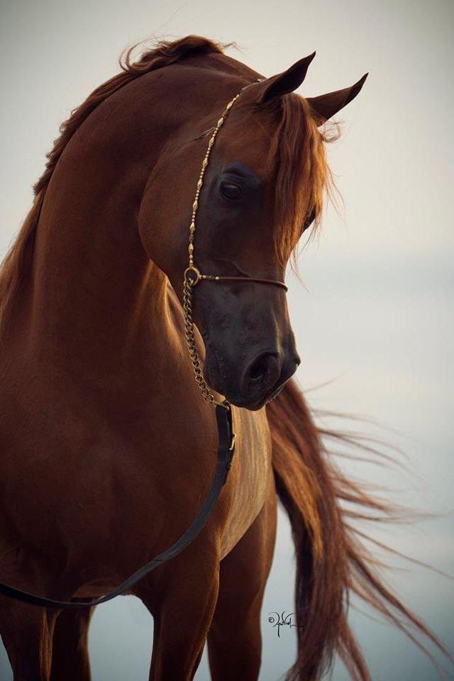 Najlepši konji na svetu - Page 4 M6TCKm