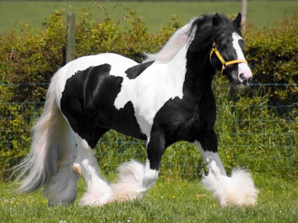 Najlepši konji na svetu - Page 4 Ufy4CG