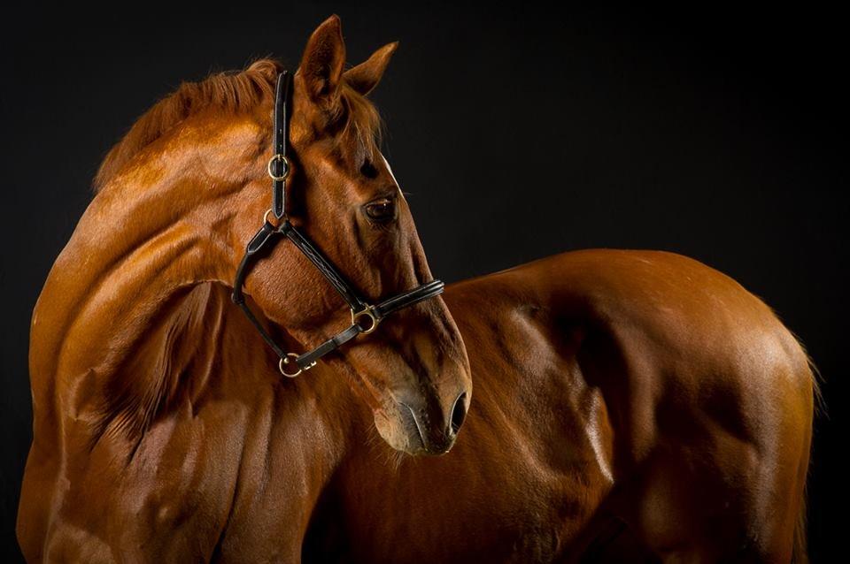 Najlepši konji na svetu - Page 4 CpYH9j