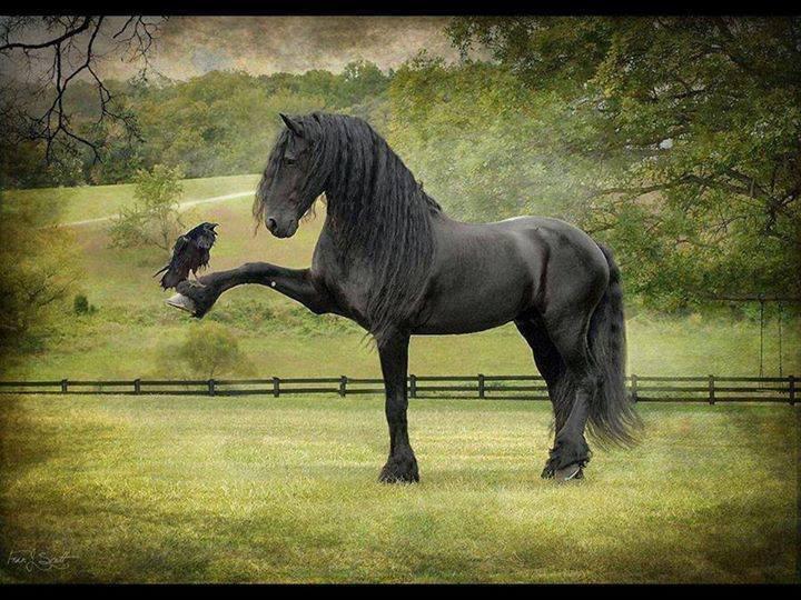 Najlepši konji na svetu - Page 6 ZXoNcU