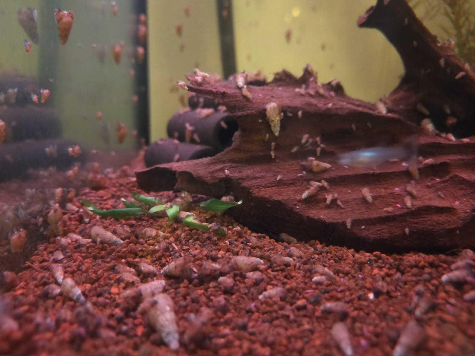 poissons en surfaces et mortalité importante VBOkev