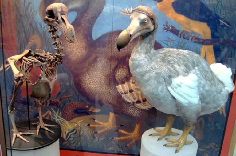 My Dinosaur figure collection: MOTU Tyrantisaurus Rex! - Page 2 Ri9ALL